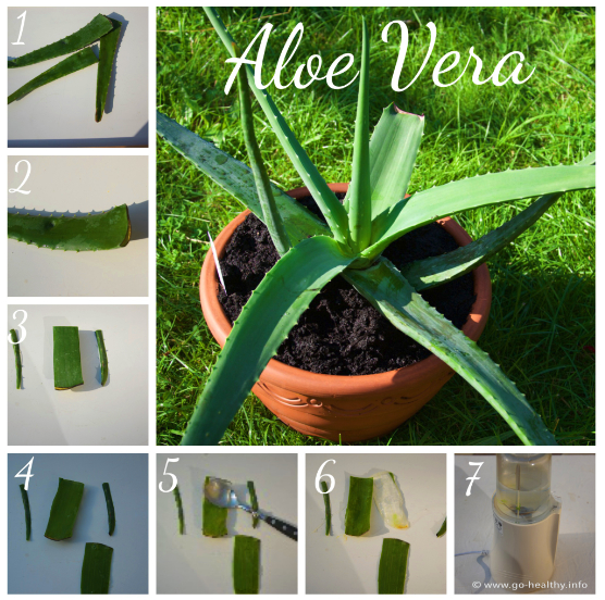 go healthy aloe vera alte pflanze mit gro er wirkung. Black Bedroom Furniture Sets. Home Design Ideas